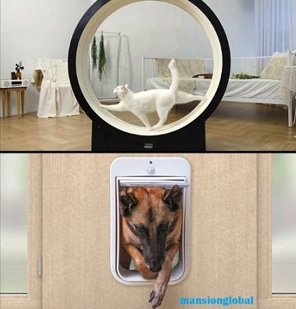 Smart Home for dogs